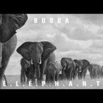 Booba – E.L.E.P.H.A.N.T (English lyrics)